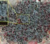 Nigeria: Satellite images show horrific scale of Boko Haram attack on Baga